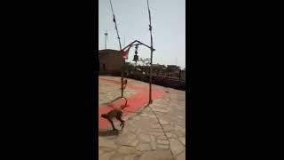 Hanumant Leela in a Temple, Jai shree ram