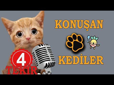 Konuşan Kediler 29 -- En Komik Kedi ları