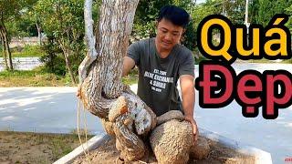30 triệu cây Mẫu Đơn tại nhà vườn nổi tiếng nhiều sanh Nam Điền già đẹp.