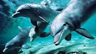 Песни дельфинов