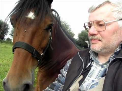 The beauty of trust as shared by hackney pony Camo