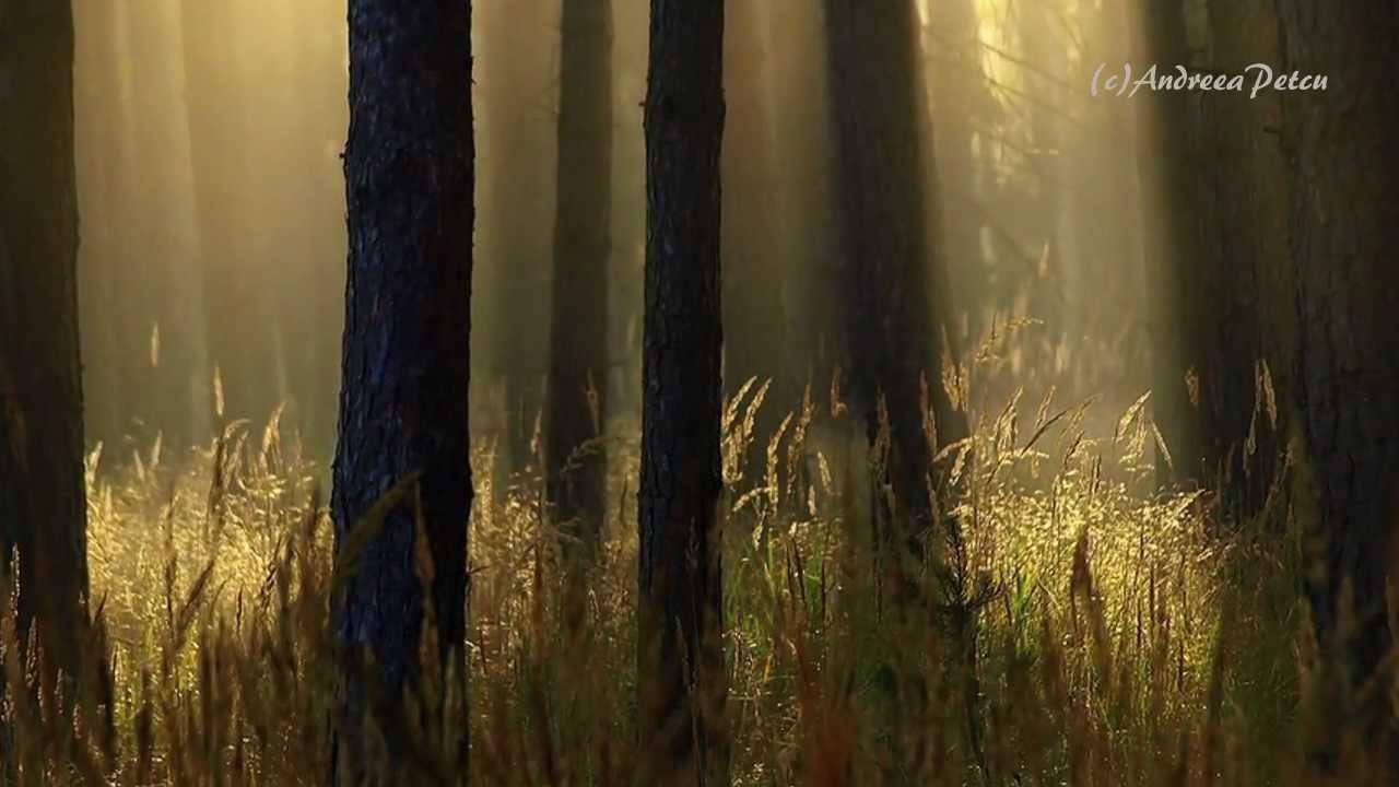 Nice Secret Garden When Darkness Falls Part - 10: SECRET GARDEN - When Darkness Falls
