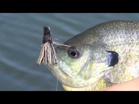 Panfish Porn - Fly Fishing For Bluegill Bream On Fly