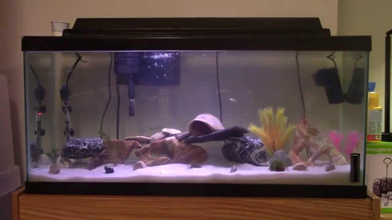 30 gallon long aquarium 1000 aquarium ideas for 30 gallon long fish tank