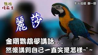 那有鸚鵡會講話說到自己害羞一直笑的=.=『金剛鸚鵡麗莎』