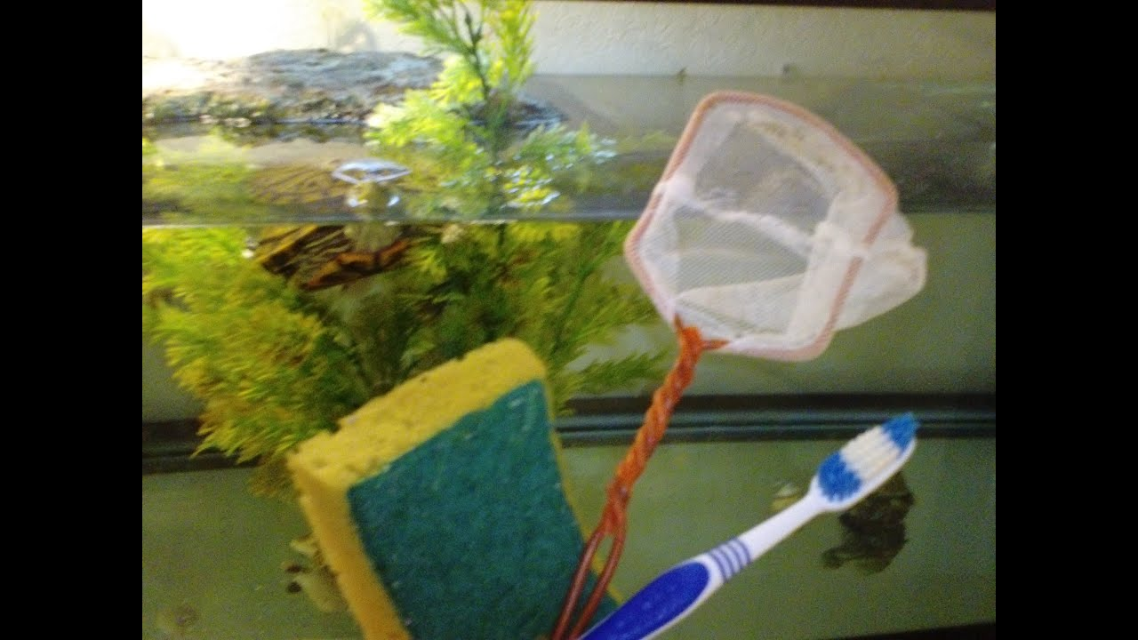 Top tips on how to keep your turtle tank clean and algae for Cleaning algae from fish tank