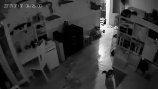 Кошки ночью