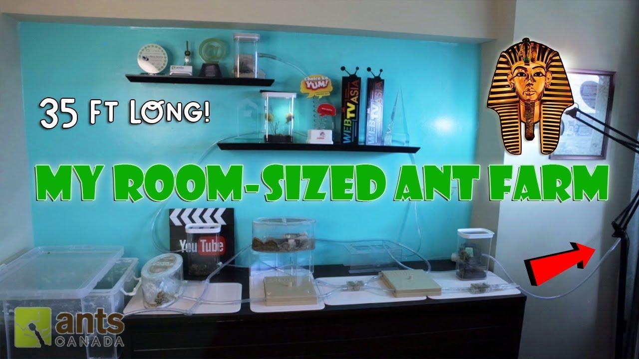 new-room-sized-ant-farm-pharaoh-ants
