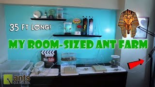 New Room-Sized Ant Farm | Pharaoh Ants