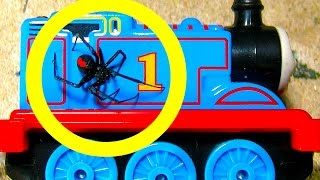 Redback spider infestation tricky toyota removal thomas tank spider trap
