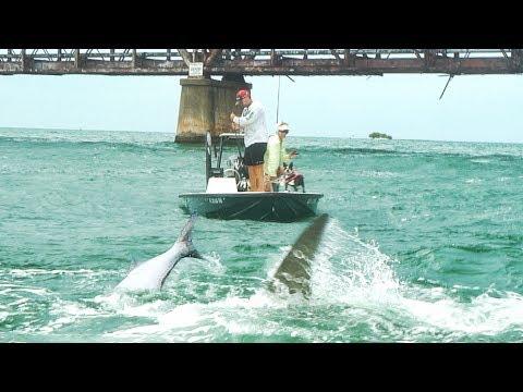 Giant Hammerhead Shark eats JonB's TARPON - Underwater Footage - Ft. LunkersTV