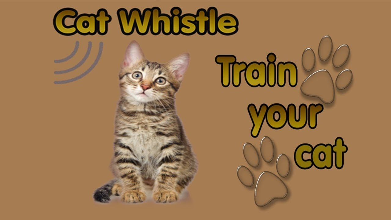 Cat whistle app image