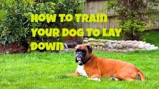 Dog Training Basics: How To Train Your Dog To Lay Down