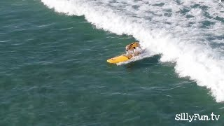 The Surfing Dog ❤ super cool  beautifully caught by drone | sillyFun.tv