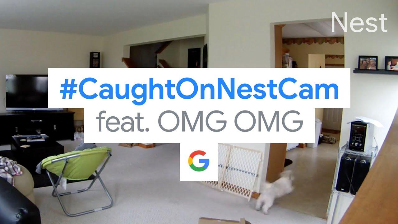 #CaughtOnNestCam OMG OMG | Security with Google Smarts