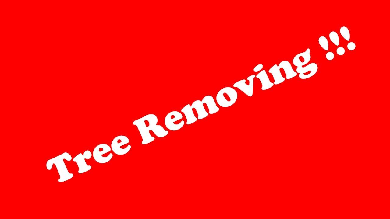 ROMAN ATWOOD TREE REMOVING
