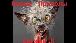 Лучшие приколы 2016 г. Выпуск №4. Смех до слёз. Смотреть всем, не пожалеете!!!