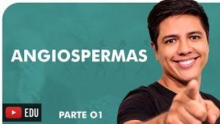 ANGIOSPERMAS - BOTÂNICA - Prof. Kennedy Ramos
