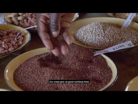Safeguarding seed in Goromonzi