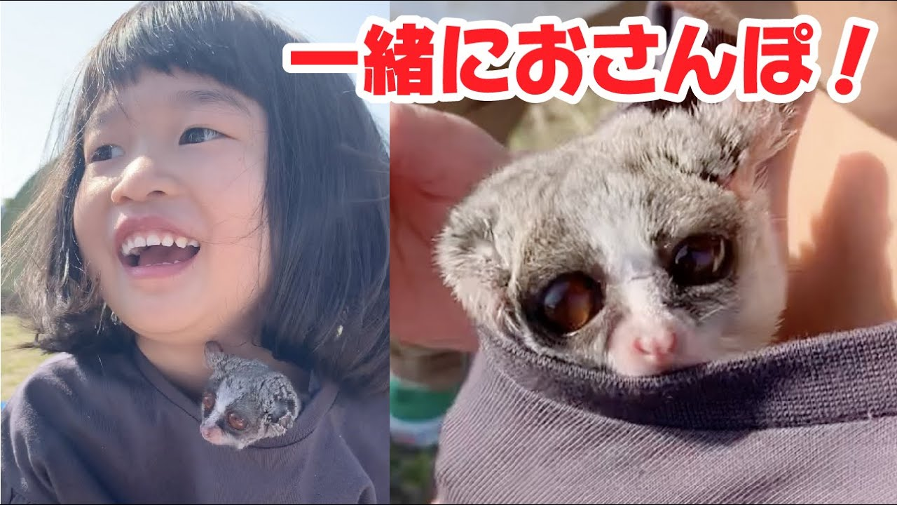【河川敷をお散歩】Pizzatoru makes her happy smile / ショウガラゴのピザトル