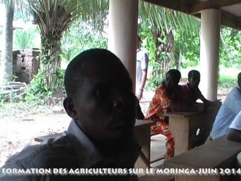 Techniques de préparation des champs et plantation de moringa
