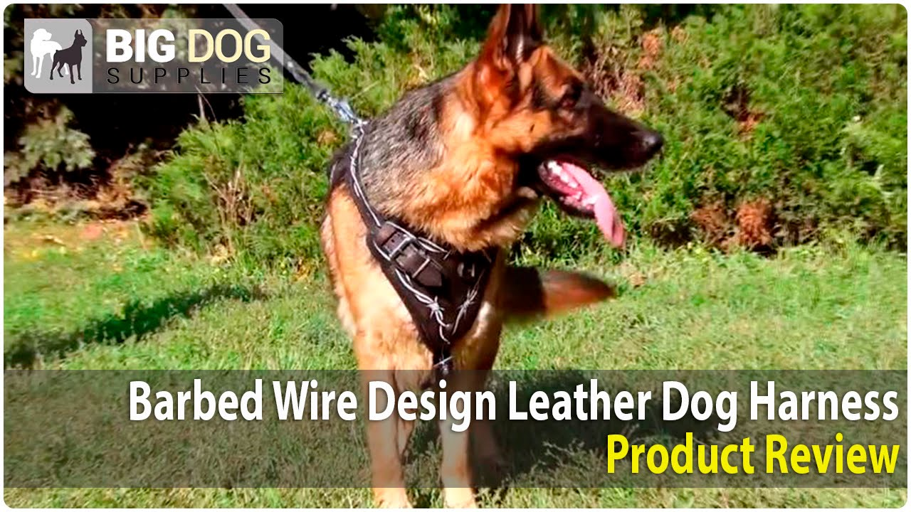 maxresdefault german shepherd and other large dogs wearing painted barbed wire wire dog harness at bayanpartner.co