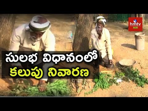 Simple Method of Weed Management | Natural Farming | hmtv Agri