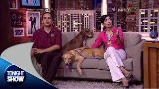 Animal Defenders dan Soraya Haque menjadikan anjing sebagai kawan