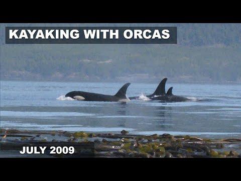 Youtube Orcas Vancouver Island