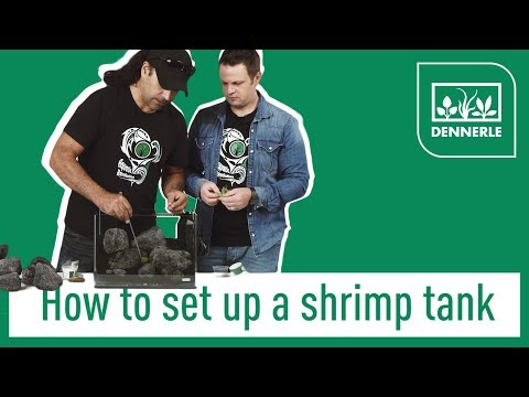 How to set up a shrimp tank! | Sharkbite #001| DENNERLE