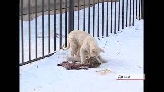 Средств на отлов бездомных собак в Братске катастрофически не хватает