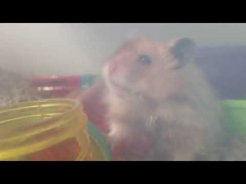 singing to my hamster