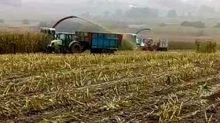 Koszenie kukurydzy 2017 sieczkarnie x2 mengele 6800 Dobre Miasto