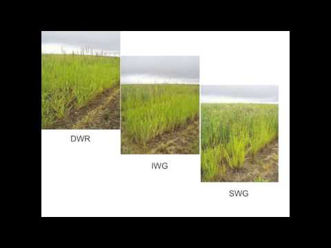 Short-Rotation Forage Legumes - Dr. Paul Jefferson - March 2013