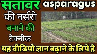 Nepali Shatavari plant||सतावर की नर्सरी||aspergers in hindi सतावर की खेती||shatavari ki nursery thumbnail