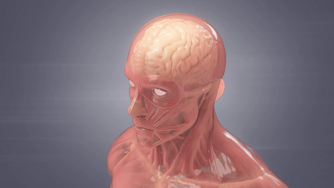 How Meningitis Spreads Webmd Youtube