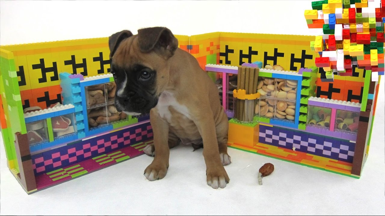 Download Lego Misty:Puppy  Pet Shop by Misty Brick.