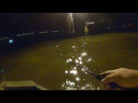Big Fish Under The Back Bay Train Bridge