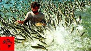 ЧТО ТВОРЯТ Местные браконьеры!Таким способом ловля рыбы на грани экологической катастрофы.(, 2017-03-05T17:19:38.000Z)