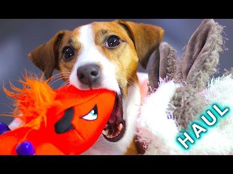 МЯГКИЕ ИГРУШКИ ДЛЯ СОБАКИ  - ОБЗОР И HAUL | ПОКУПКИ ИЗ ЗООМАГАЗИНА - GIGWI | Elli Di Pets