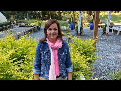 Fall Gardening & Planting Bulbs Nursery Tour  // Gardening with Creekside
