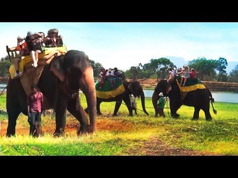 Animal cruelty caught in act : Elephant rides