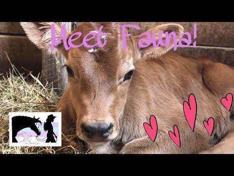 Meet Fauna!