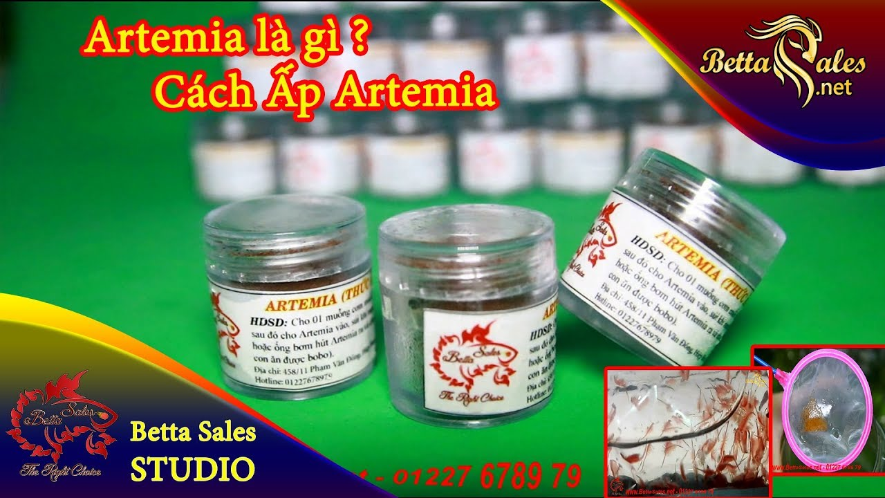 Chia sẻ kinh nghiệm Betta – Artemia là gì ? – Cách ấp Artemia – Thức ăn cho cá con