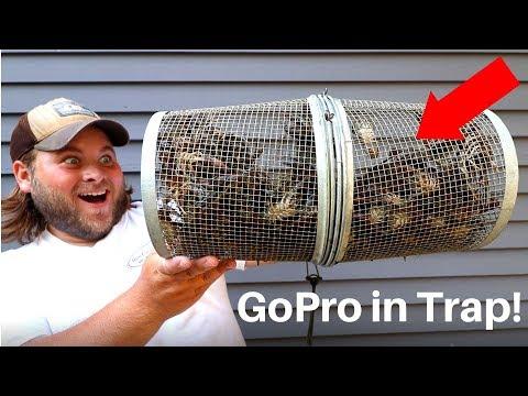 Can Crawfish ESCAPE A Crawfish Trap? (Gopro In Crawfish Trap!)