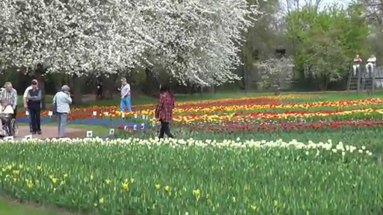 tulipan tulpenschau im britzer garten in berlin am 24 april 2015 youtube. Black Bedroom Furniture Sets. Home Design Ideas