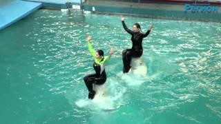Ярославский дельфинарий. Тренировка(, 2014-04-16T09:13:17.000Z)