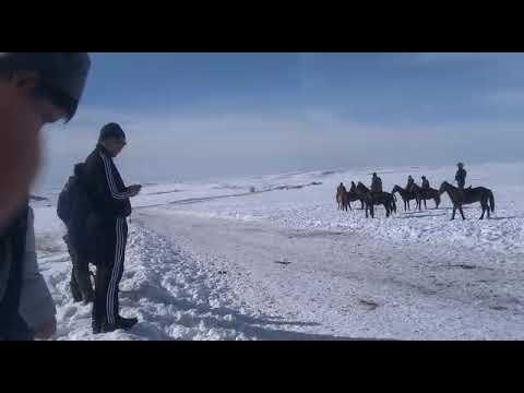 Қордай ауданы Сұлутөр ауылы 02/02/2020ж Құнан бәйге