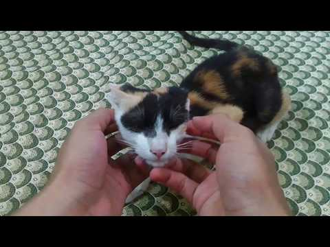 Petting A Cat(Actually A Kitten)