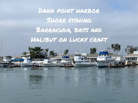 Ep 18 Dana Point Harbor Breakwater Sandbass, Halibut And Barracuda Shore Fishing